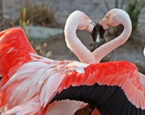 dance of love photocredit kjunstorm Foter CC BY